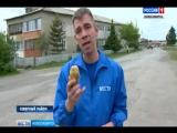 «Вести» разобрались в картофельном парадоксе в деревнях Новосибирской области