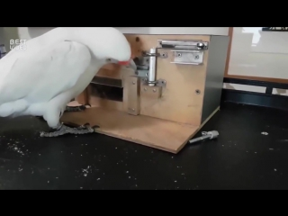 Умная птичка
