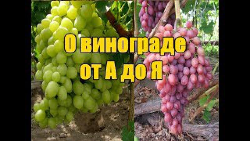 Выращивания винограда - пошаговая инструкция / Подробное поэтапное видео от А до Я » Freewka.com - Смотреть онлайн в хорощем качестве