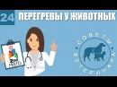 Перегревы у животных Советы ветеринара