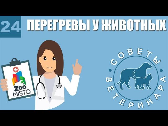 Перегревы у животных. Советы ветеринара