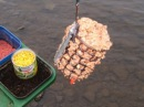 Супер уловистая прикормка на фидер для ловли карася