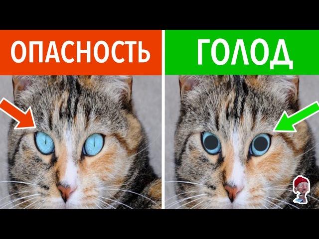 16 СКРЫТЫХ КОШАЧЬИХ ЗНАКОВ. Как понимать кошачий язык?