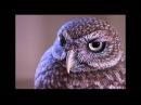 Jennifer Felton, avid bird carver