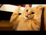 Funny video cats - By All inOne
