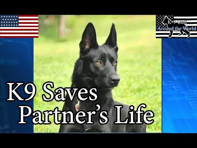 Police K9 Saves Partner's Life after Attack