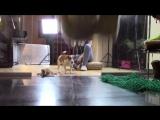 ПРАНК НАД СОБАКОЙ - СОБАКА В ШОКЕ - СКРЫТАЯ КАМЕРА - МОЙ ПАРЕНЬ - Elli Di Pets