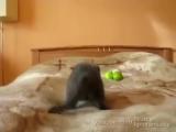 Котенок против фруктов