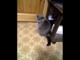 Мой кот УБИЙЦА!