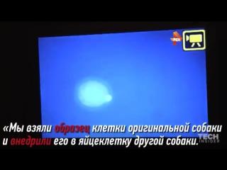 Корея подарила России трёх клонированных овчарок-ищеек