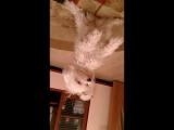 мой пёс мари белая болонка