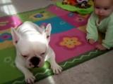 Собачка реально учит ребенка ползать!!! Очень позитивно!