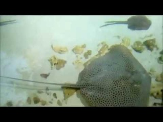 Oceanarium in Moscow - a video tour of Olesya Bel