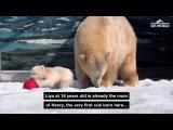 Twin polar bear cubs born at Sea World