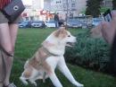 ^cute dog Akita inu name Cimi
