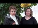 Как вырастить цитрусовые дома Павловский цитрон Шишкан. Сайт Садовый мир