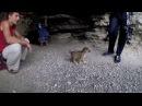 Липецкая Абхазия. Воргольские скалы, заброшенная мельница