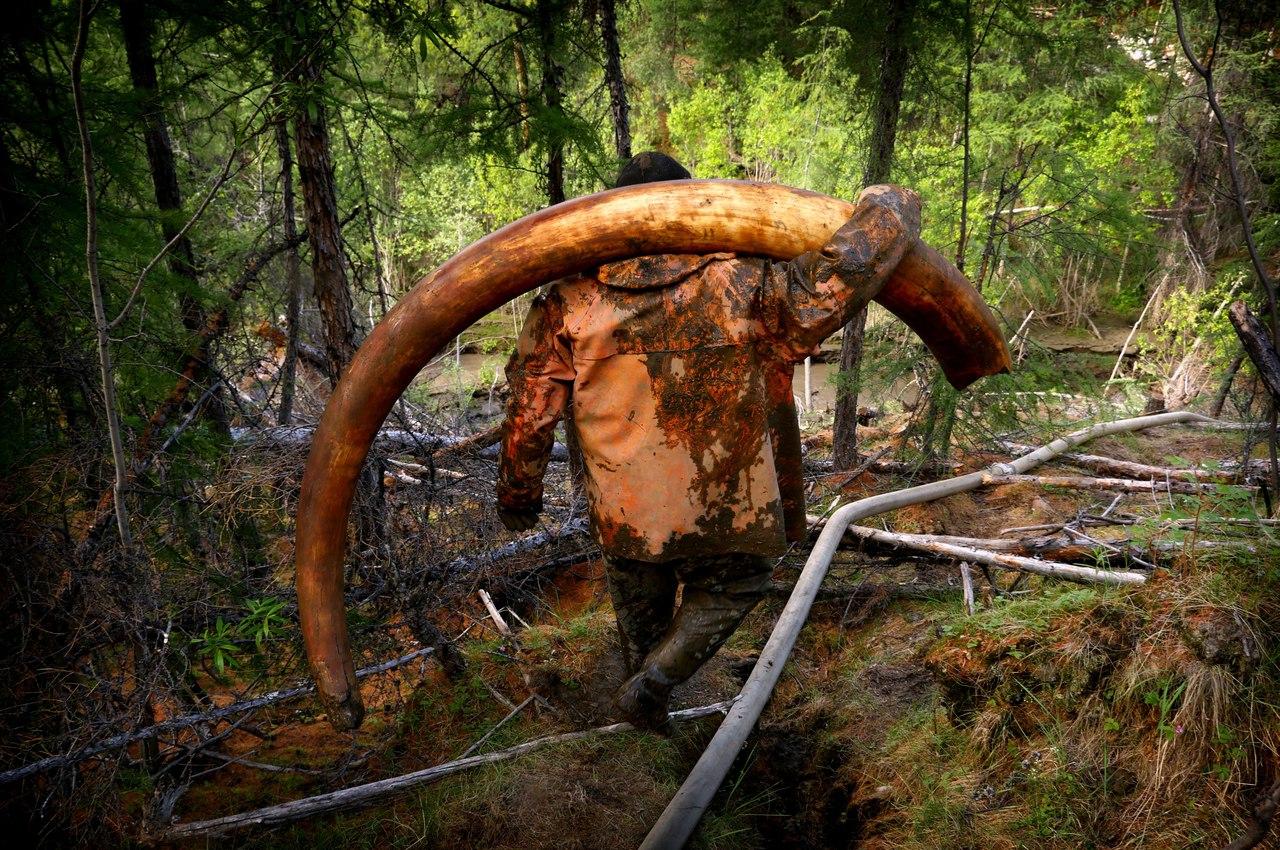В Одессе неожиданно нашли древние останки мамонта