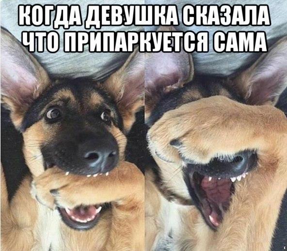 Фото №456239693 со страницы Стаса Моховикова