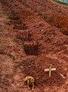 Преданный пёс уже третий день не покидает могилу своей хозяйки…