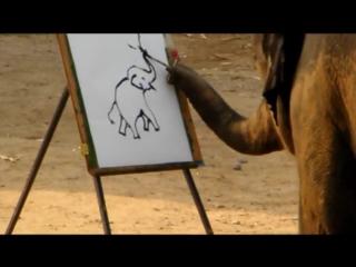 Слон рисует лучше меня