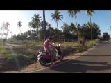 Небольшой ролик о моей собаке Нэнси в Индии