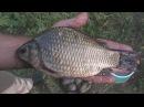 Рыбалка . Ловля на убийцу карася с клубничной кашей. My fishing.