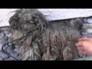 Бездомные собаки ДО и ПОСЛЕ спасения!