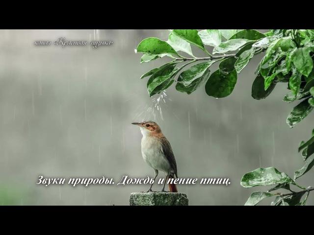Звуки природы. Дождь и пение птиц.