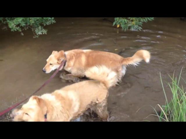 Маркус и Джесси любят грязь
