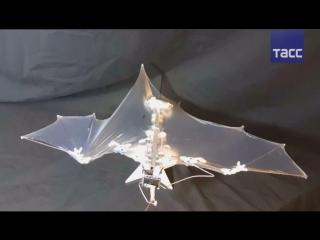 Беспилотник Bat Bot в форме летучей мыши представили в США