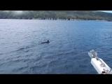 Наблюдение за китами / Whale Watching