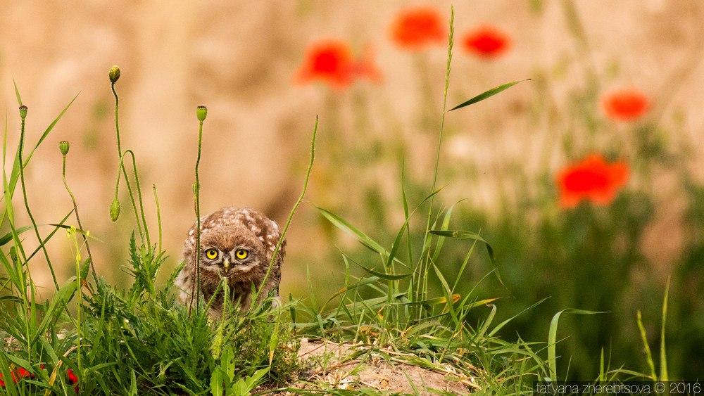 wildlife.crimea.ua