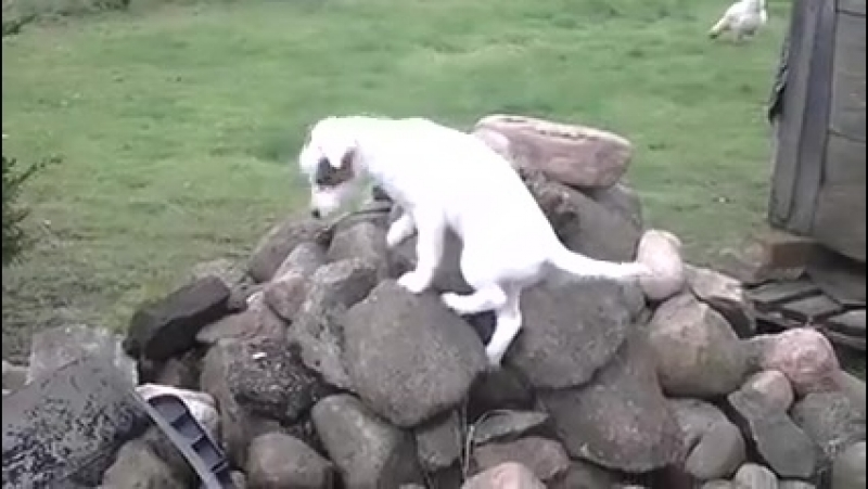 Кида - скалолазка