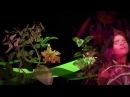 Chancha Via Circuito - Jardines ft. Lido Pimienta Official video