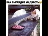 m.a.r.i.n.a_m.v video