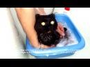 Как помыть безлапого кота в тазике Приют Дари добро Новосибирск