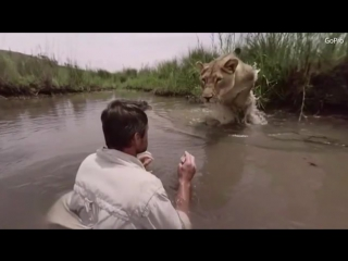 Astonishing footage shows a lioness jump and hug animal expert