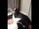 Котам иногда вообще насрать