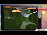 Видеоурок по биологии Отряды высших зверей
