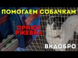 """#ВКдобро: Помогаем собачкам в приюте """"Ржевка"""""""