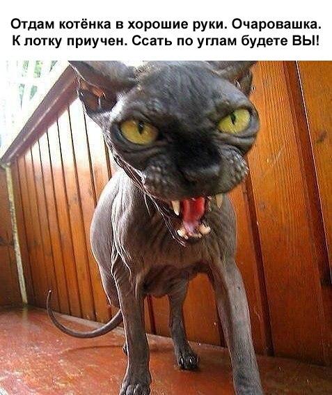 На переработку )))