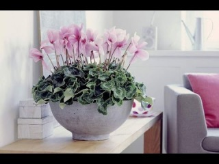 10 лучших мест для комнатных растений. Куда поставить цветы в квартире