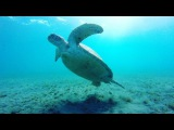 Freediving wih turtle Aug 1, 2017 at 349pm UTC