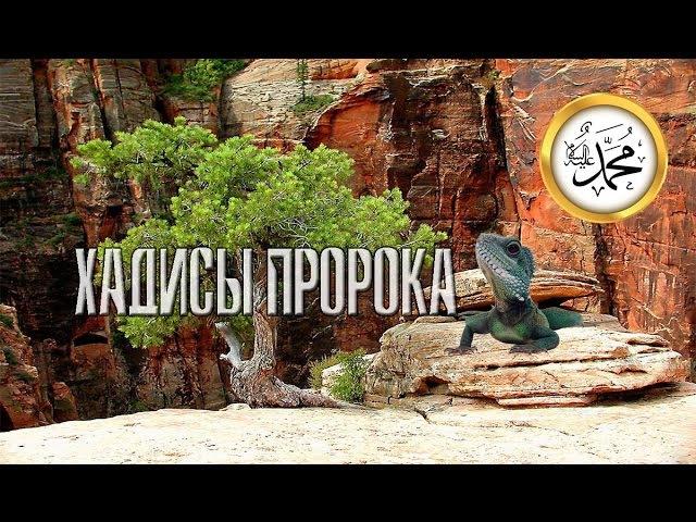 ХАДИСЫ о том как ящерица, дерево,ГОРЫ ЗАСВИДЕТЕЛЬСТВОВАЛИ что МУХАММАДﷺ РАБ И ПОСЛАННИК АЛЛАХА