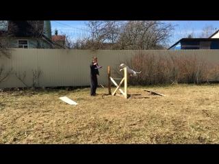 Питбуль Ямаха, тренировка прыжка