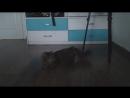 Мой Видео Дневник - 1 Матрица!
