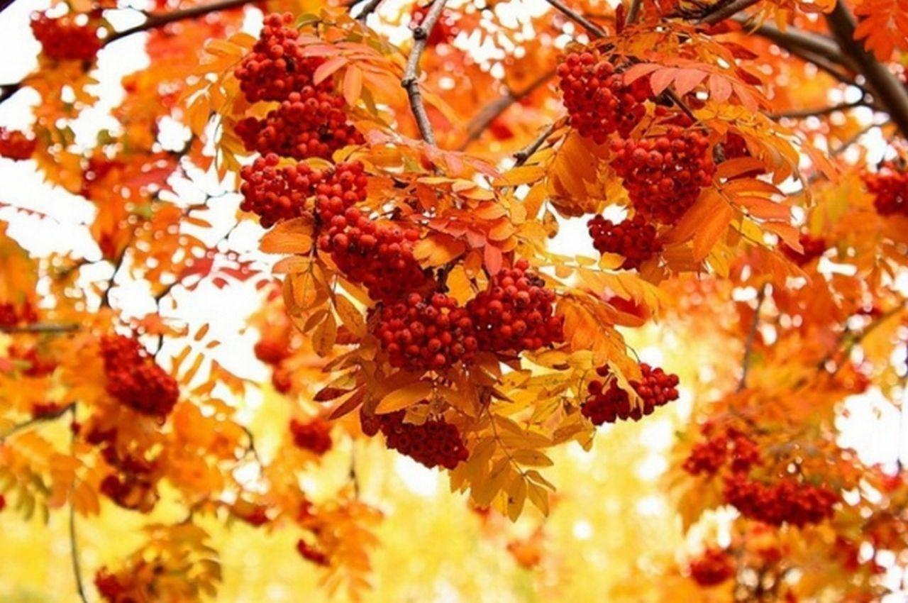 Осенняя пора,глаз очарованье!