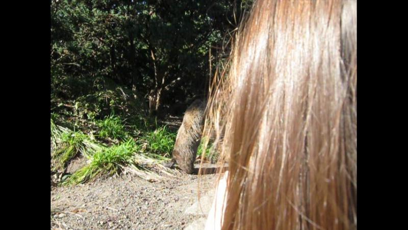 Marmotte sociable !