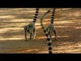 BBC.Madagascar.BONUS.2011